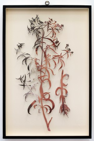 Paolo Giardi, You can learn a lot of things from the flowers - Plant LXXX, 2013, cut out magazine centerfold and insect pins on somerset paper, 24 x 16 inches