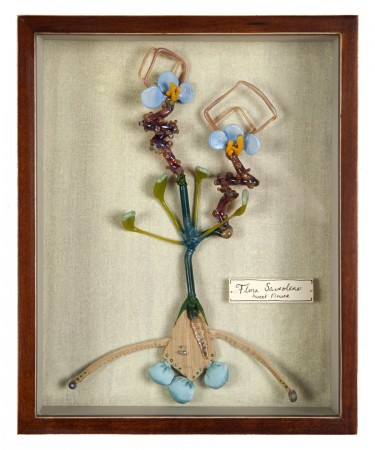 Flora Saveoleus (Sweet Flower) 2013 mixed media and flame-worked glass  10 x 8 inches