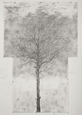 Jim Sullivan, Tree #1, 2011 graphite on paper 90 x 60 inches