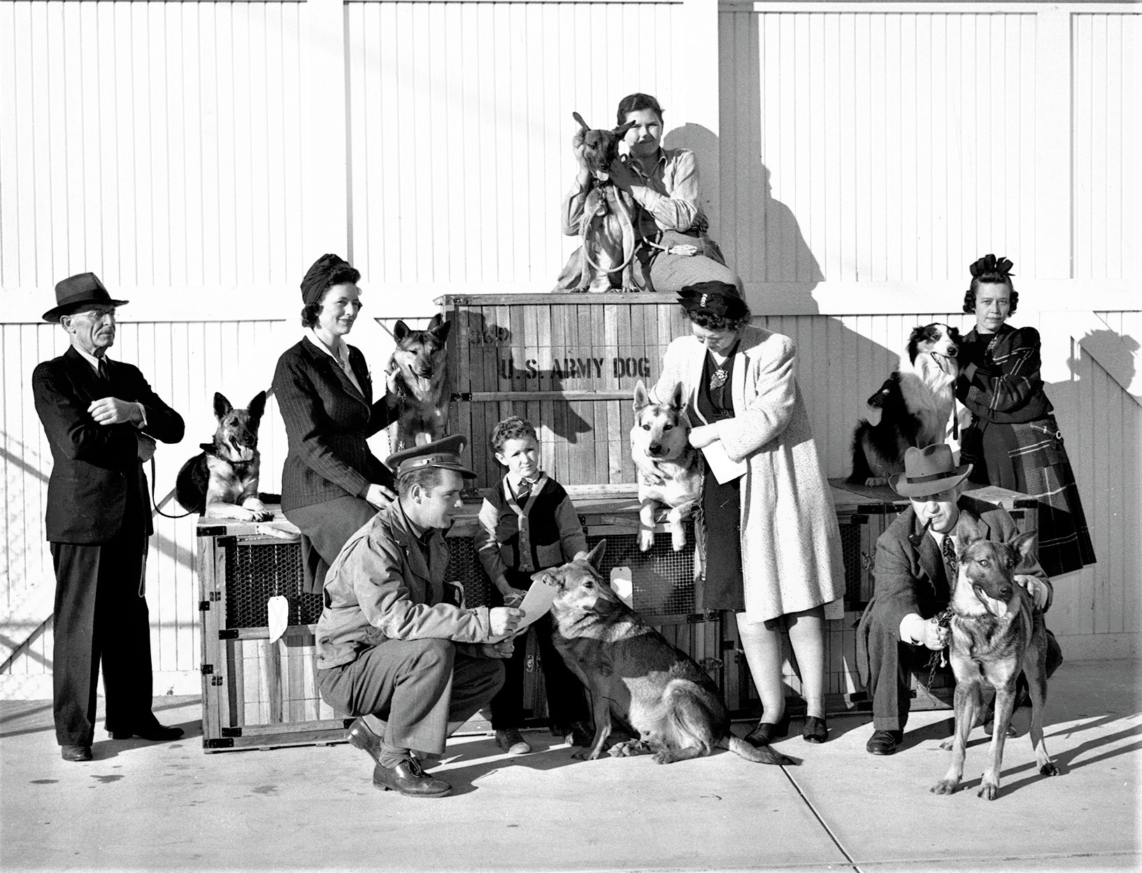 Dogs to be shipped to Dog Corps at Front Royal, Virginia  Fort Worth Star-Telegram Collection