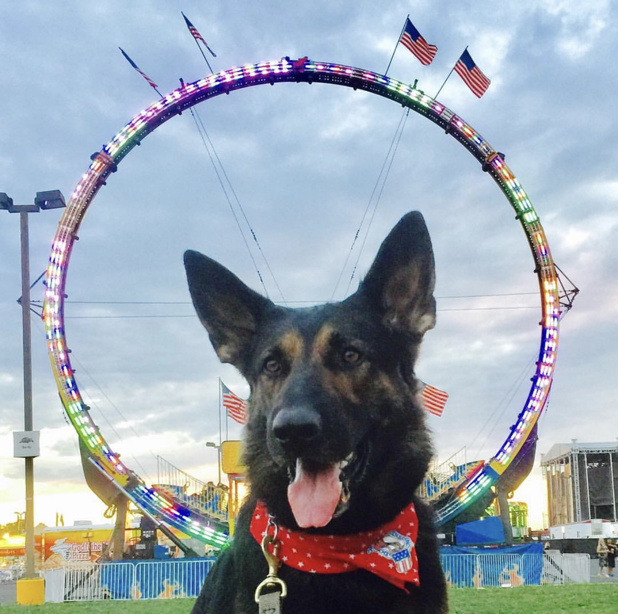 K-9 Bdak - Specialty: Explosives & Firearm DetectionBreed: German Shepherd DogBirthdate: April 29, 2014Birthplace: Foley, MinnesotaColor: Black and TanWeight: 77 PoundsCertification: United States Army &National Police Canine AssociationFood: NutriSource PerformanceHometown: Saint Cloud, Minnesota