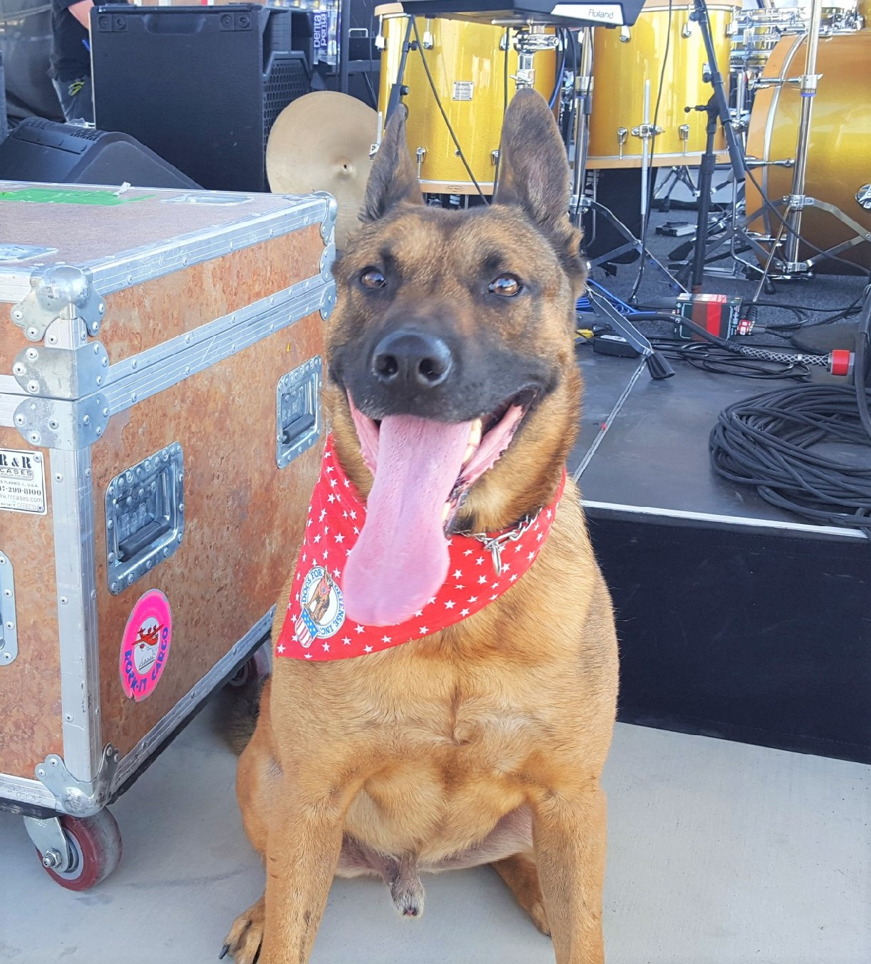 K-9 Pito - Specialty: Explosive DetectionBreed: Belgian MaliniosBirthdate: July 13, 2013Birthplace: SlovakiaColor: TanWeight: 85 PoundsCertification: California POST BoardFood: NutriSource, PerformanceHometown: Grover Beach, California