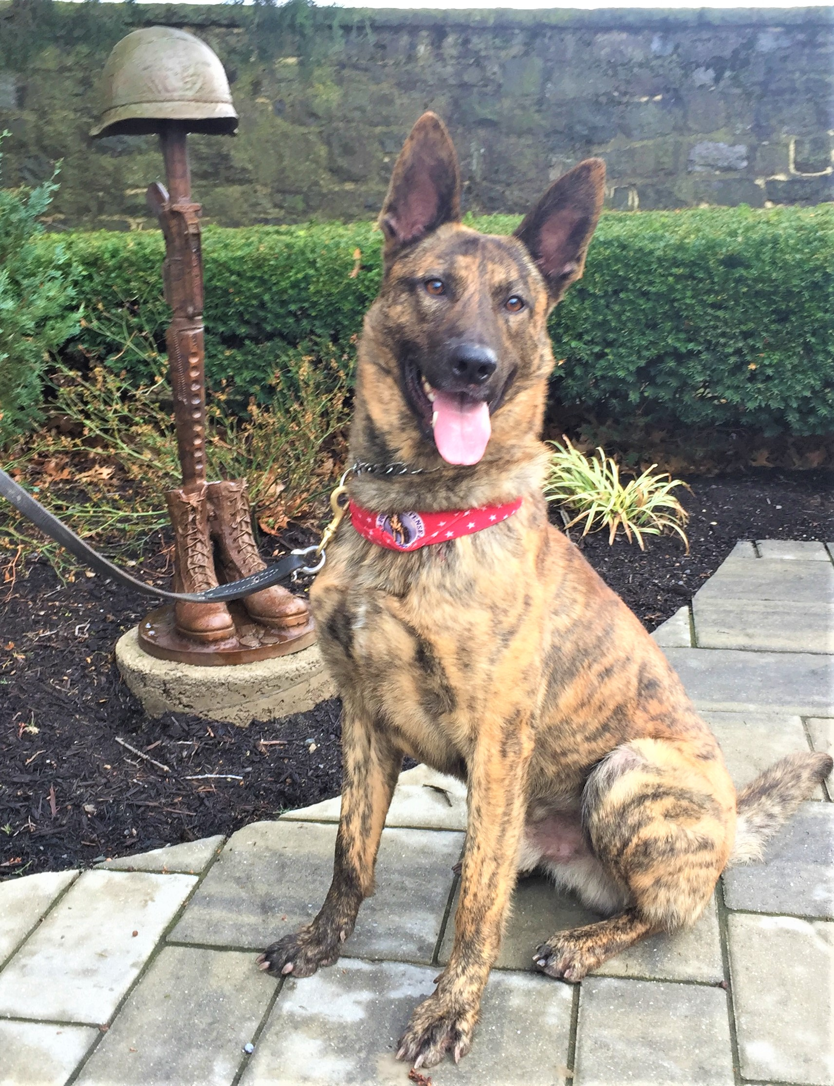 K-9 Kenner - Specialty: Narcotic DetectionBreed: Dutch ShepherdBirthdate: August 1, 2015Birthplace: SlovakiaColor: BrindleWeight: 67 PoundsCertification: North American Police Working Dog AssociationFood: NutriSource, PerformanceHometown: Enola, Pennsylvania