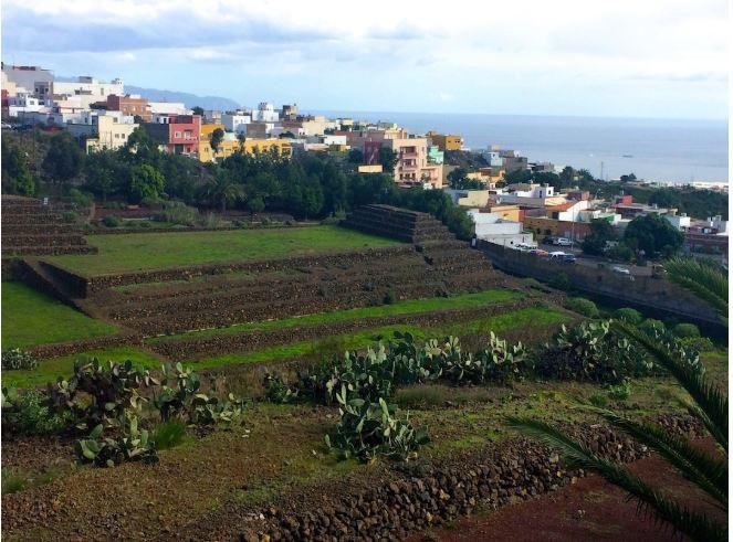 Tenerife 1.JPG