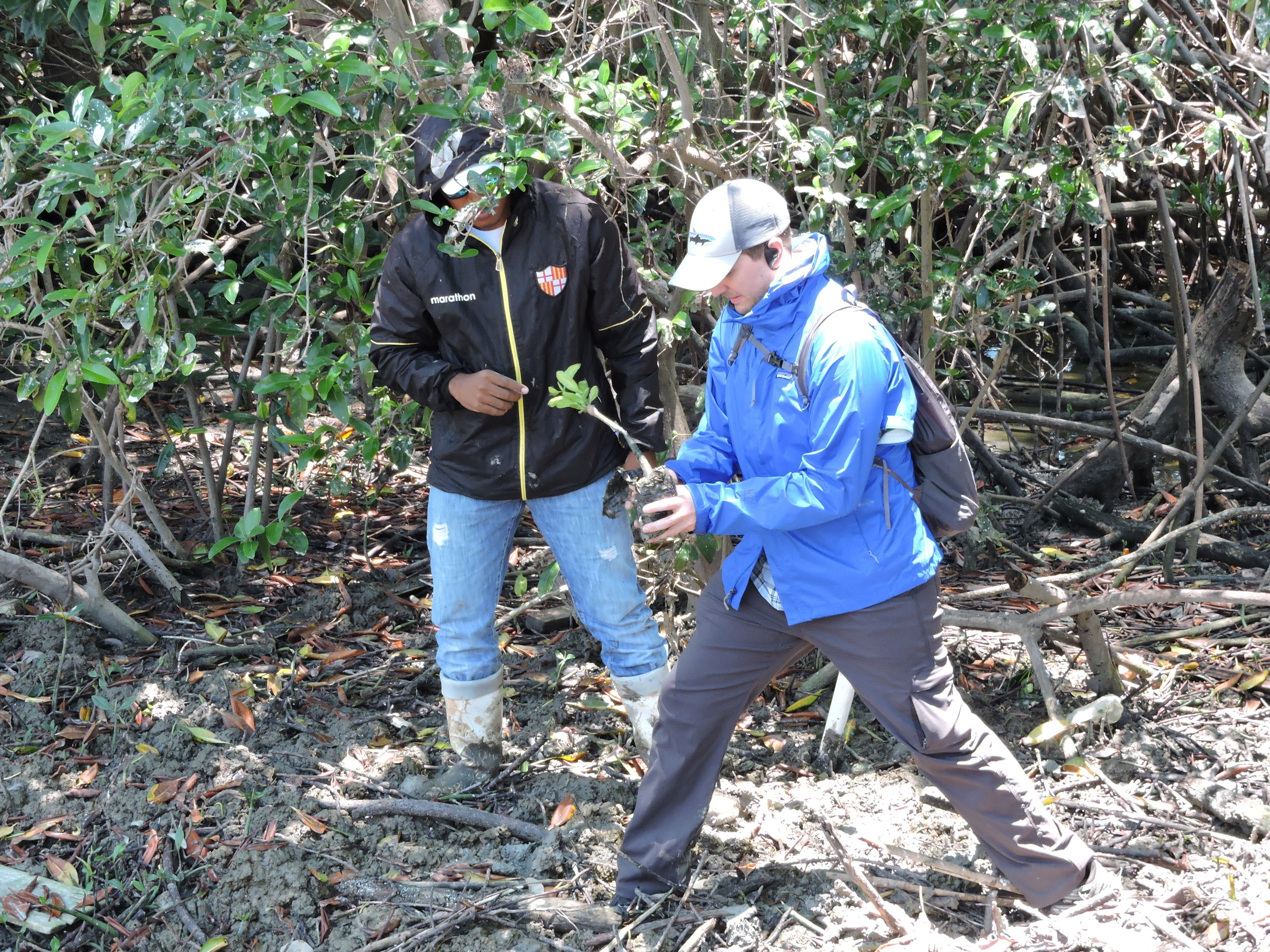 B4Nature participant Brian Schoening, Program Manager of Environmental Sustainability with Northrop Grumman Corporation, planting a mangrove in the El Morro Mangrove Wildlife Refuge.