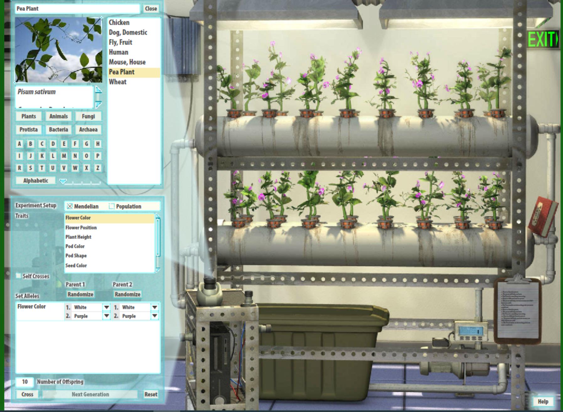 Pea Plant Genetics