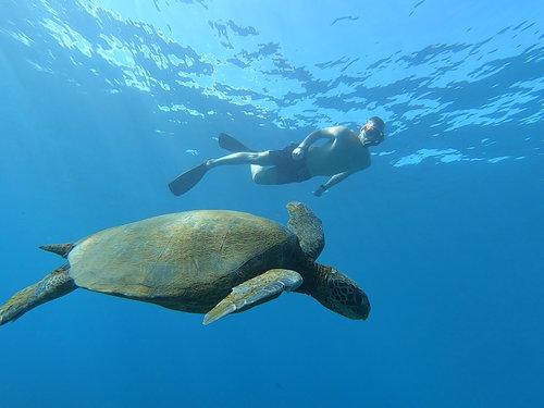 Blue Soul Maui, Maui, Private Tours, Maui Private Tours, Outrigger Canoe, Outrigger Canoe Tour, Paddle Adventure, Canoe Surfing, Green Sea Turtle, Sea Turtle, Outdoor Adventure, Snorkel, Snorkeling, Snorkel Maui