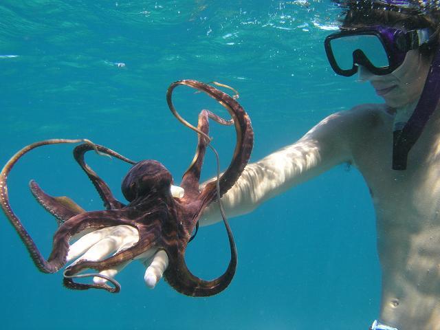 Blue Soul Maui, Maui, Private Tours, Maui Private Tours, Outrigger Canoe, Outrigger Canoe Tour, Paddle Adventure, Canoe Surfing, Green Sea Turtle, Sea Turtle, Outdoor Adventure, Snorkel, Snorkeling, Snorkel Maui, Fish, Hawaiian Fish, Octopus