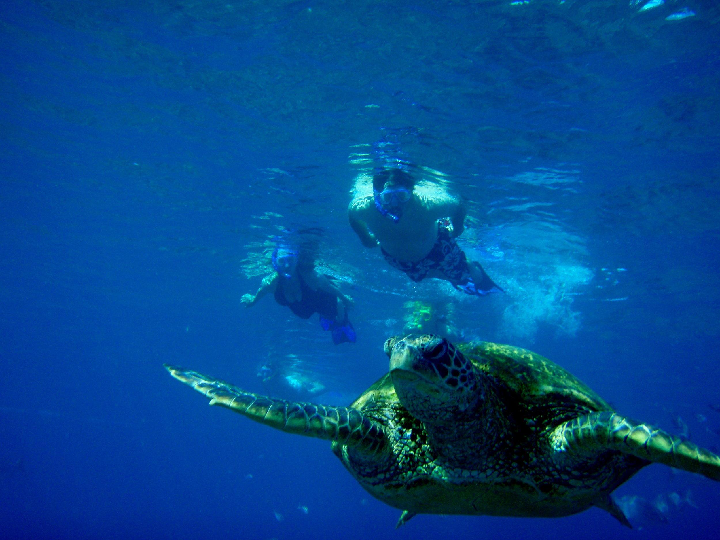 Blue Soul Maui, Maui, Private Tours, Maui Private Tours, Outrigger Canoe, Outrigger Canoe Tour, Paddle Adventure, Canoe Surfing, Green Sea Turtle, Sea Turtle, Outdoor Adventure, Snorkel, Snorkeling, Snorkel Maui, Fish, Hawaiian Fish
