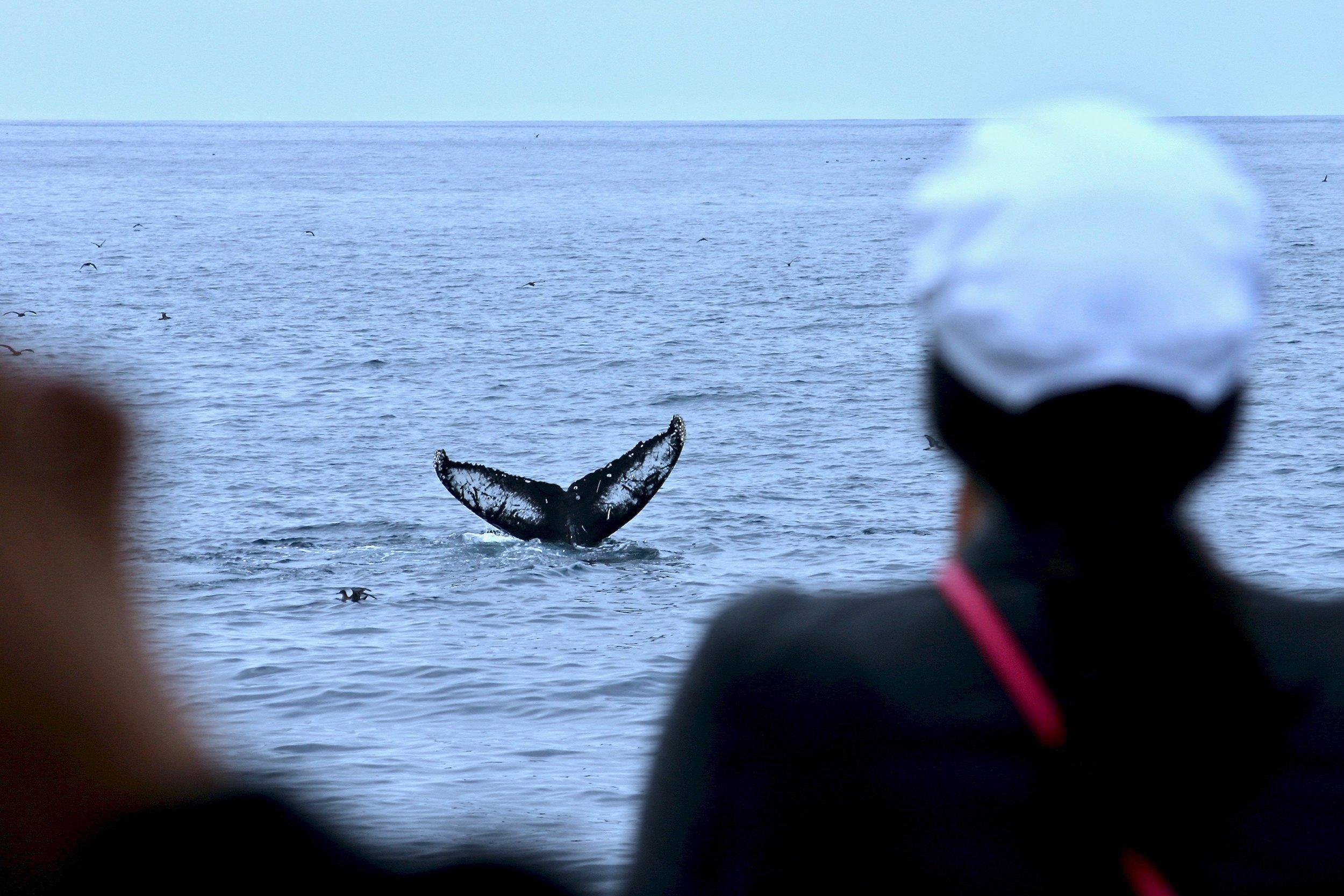 Blue_Soul_Maui_Outrigger_Canoe_Whale_Watch_10.jpg
