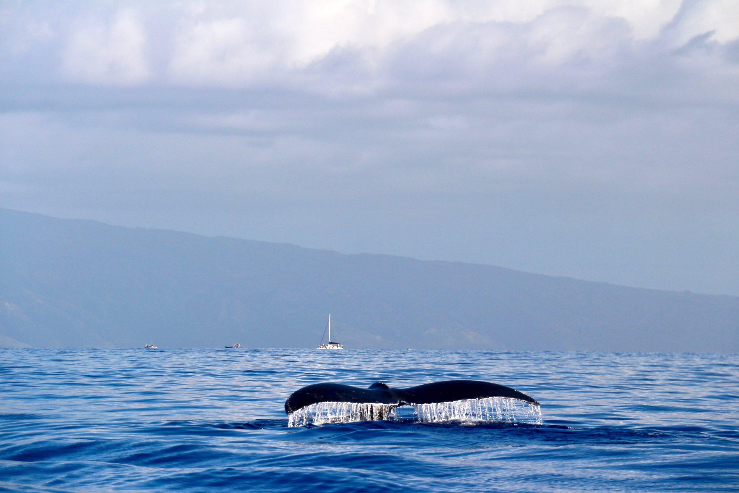 Blue_Soul_Maui_Outrigger_Canoe_Whale_Watch_6.jpg