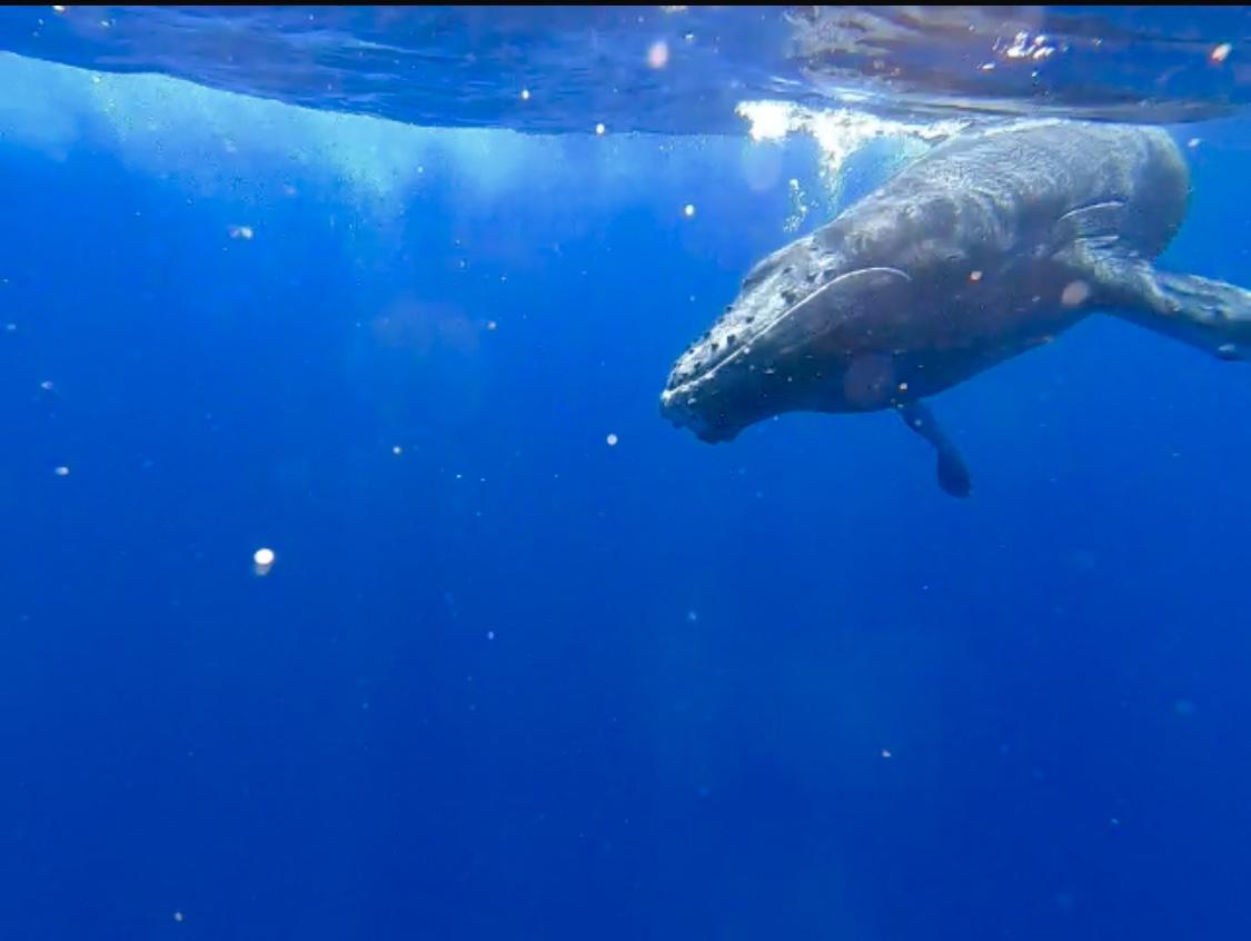 Blue_Soul_Maui_Outrigger_Canoe_Whale_Watch_3.jpg