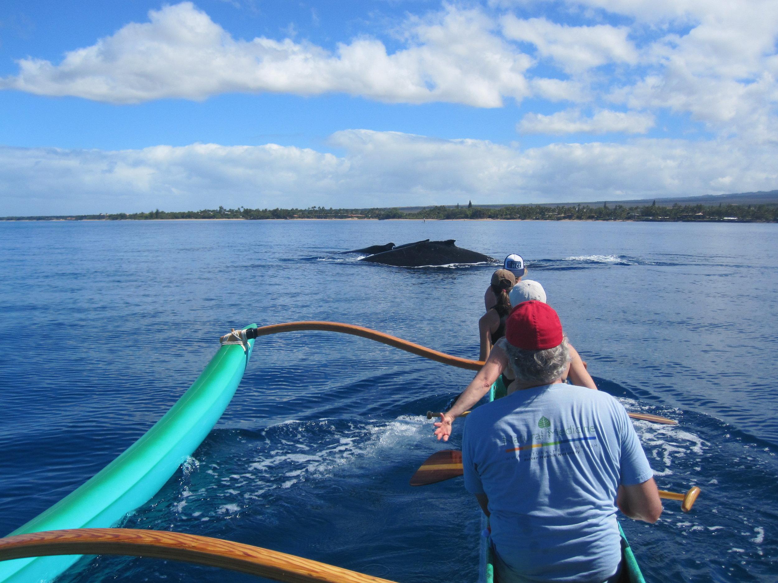 Blue_Soul_Maui_Outrigger_Canoe_Whale_Watch_1.jpg