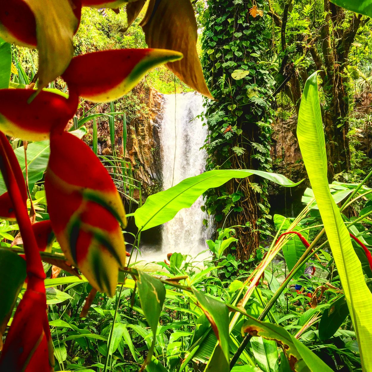 Blue_Soul_Maui_Private_Tour_Hana_Waterfall_6.jpeg