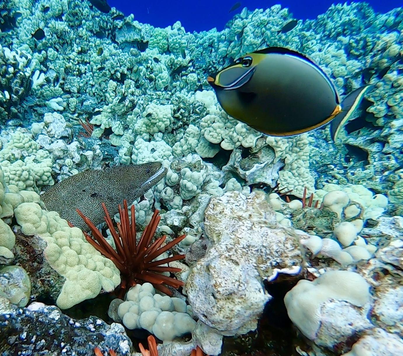 Blue_Soul_Maui_Snorkeling_Fish_3.jpg