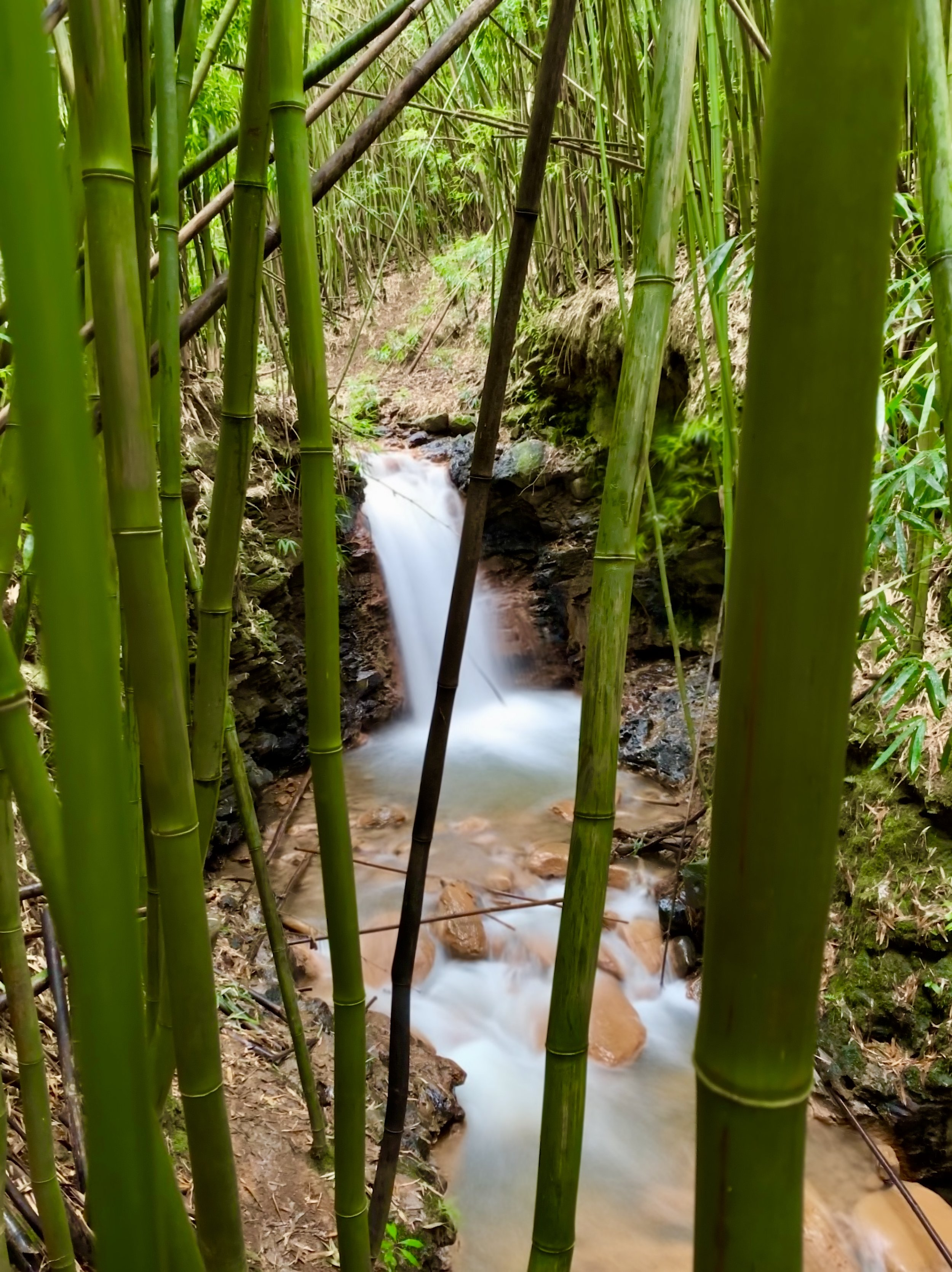 Blue_Soul_Maui_Private_Tour_Hana_Waterfall_4.jpg