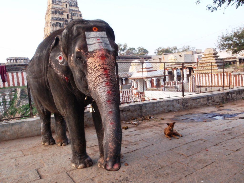 Lakshmi the Temple Elephant of Hampi -