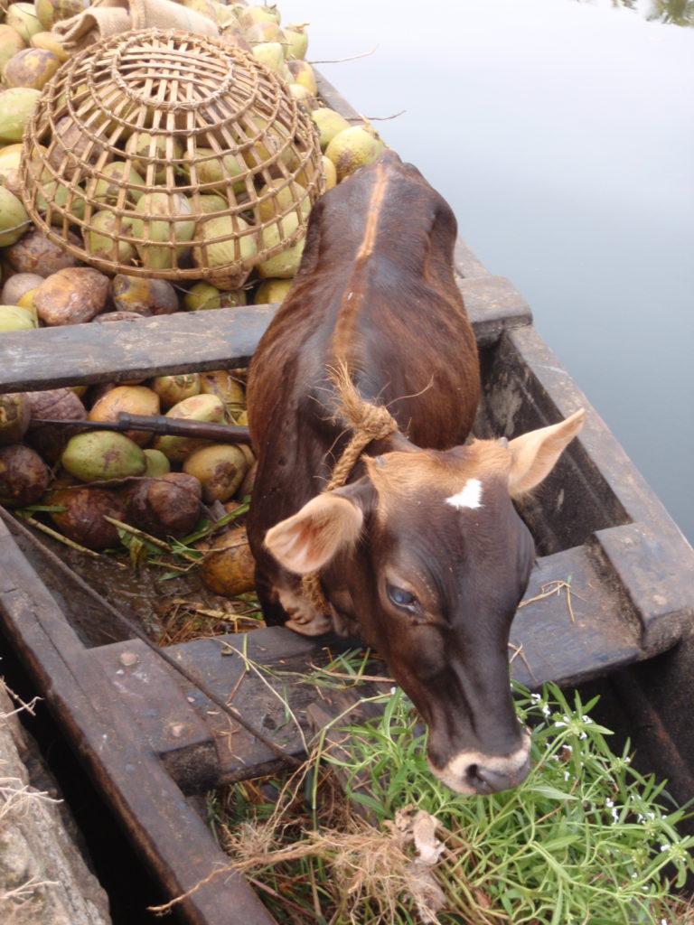 Backwaters of Kerala -