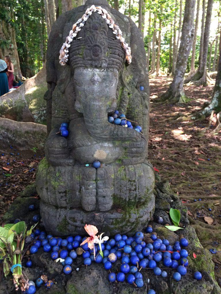 Rudraksha Forest - Kauai