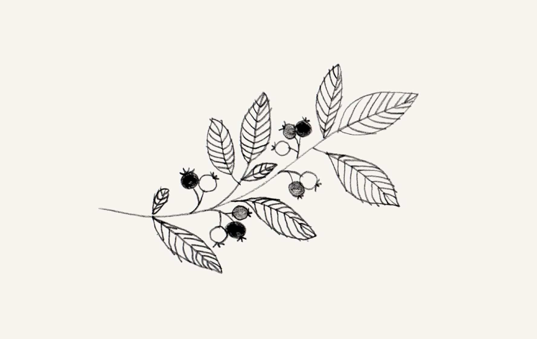 Beautiful ink drawing of some leaves n shit.