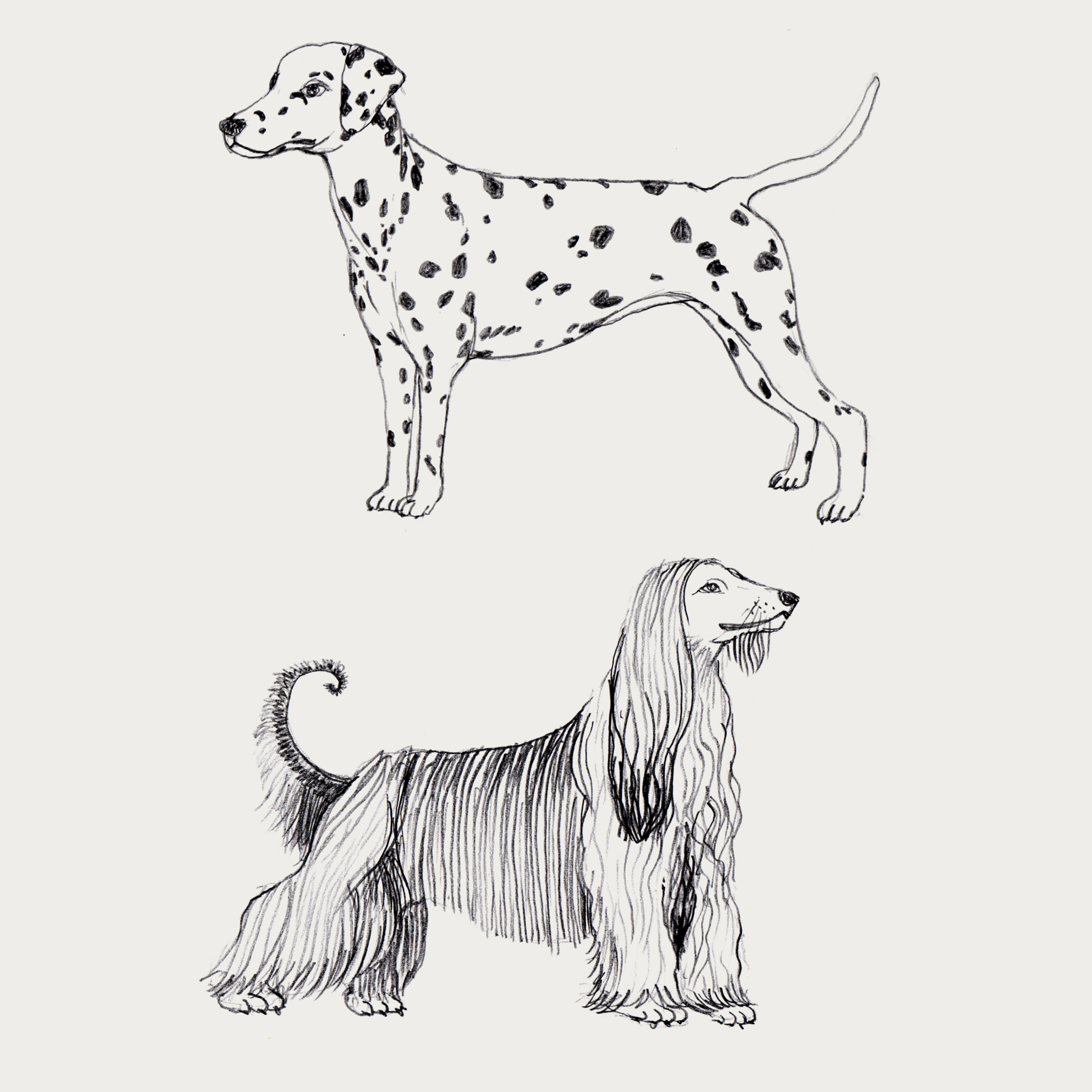 9A_Dogs.jpg