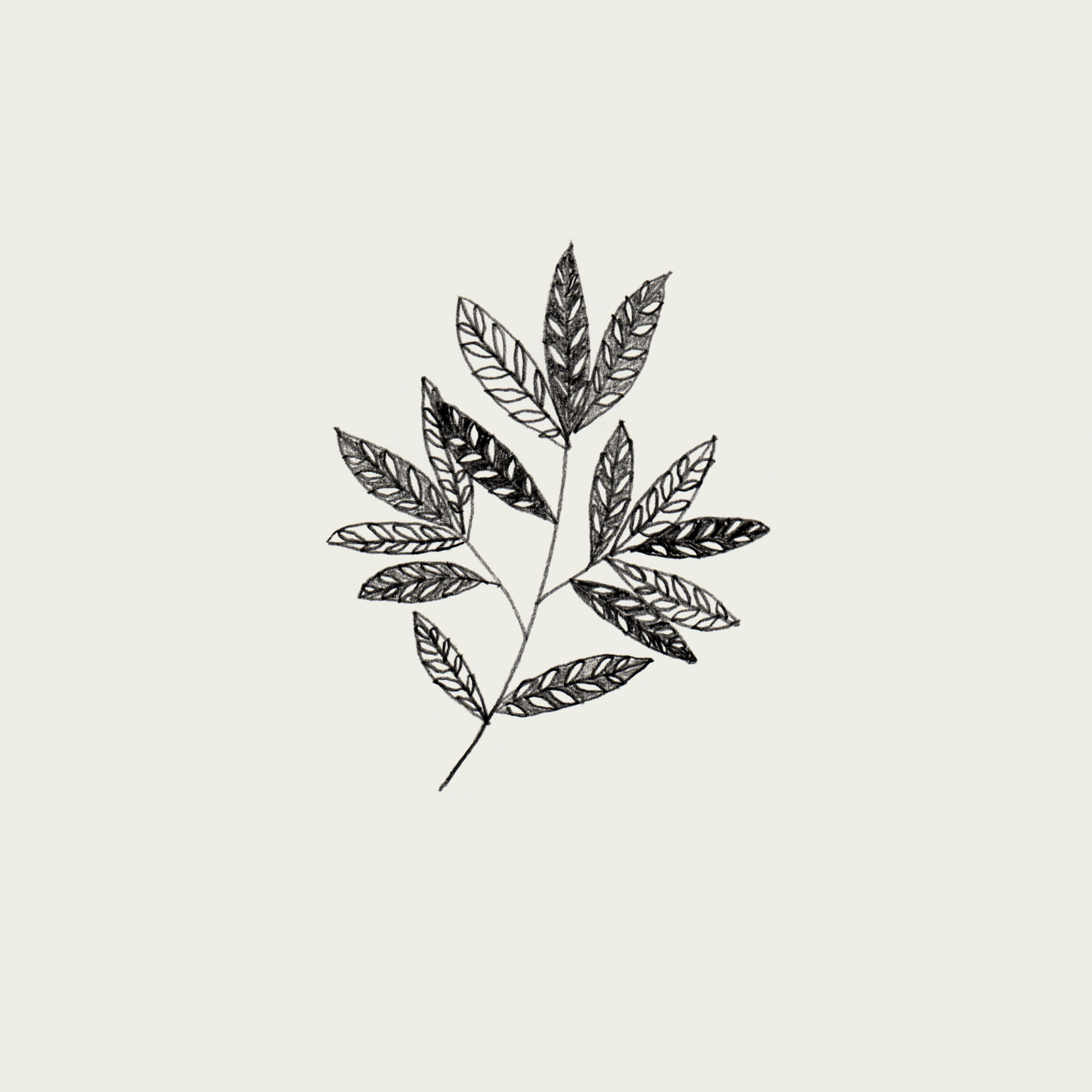 Black-white-flower-leaf-illustration-5.jpg
