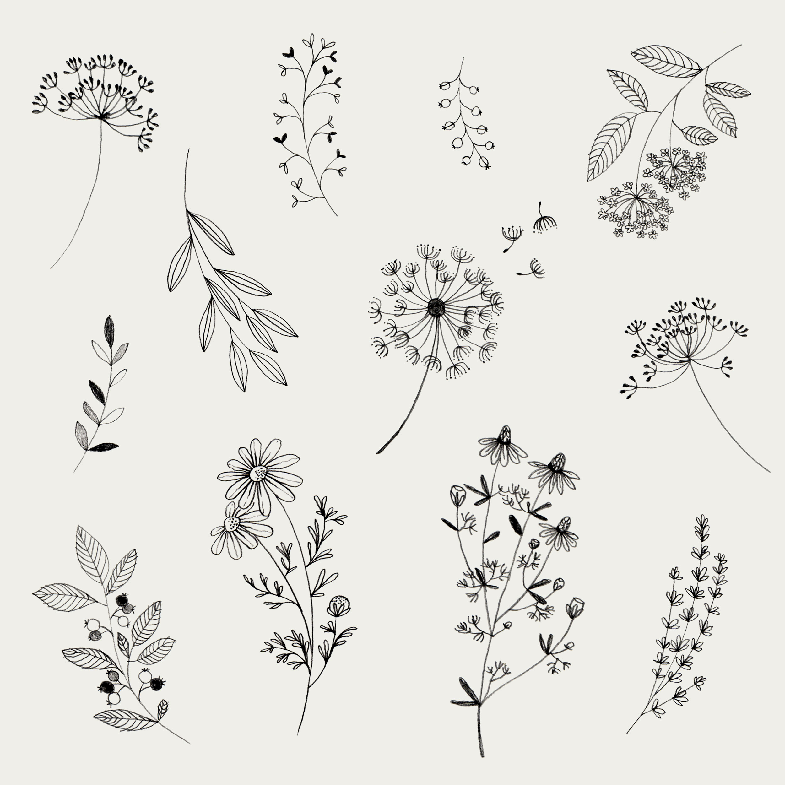 Black-white-flower-leaf-illustration-3A.jpg