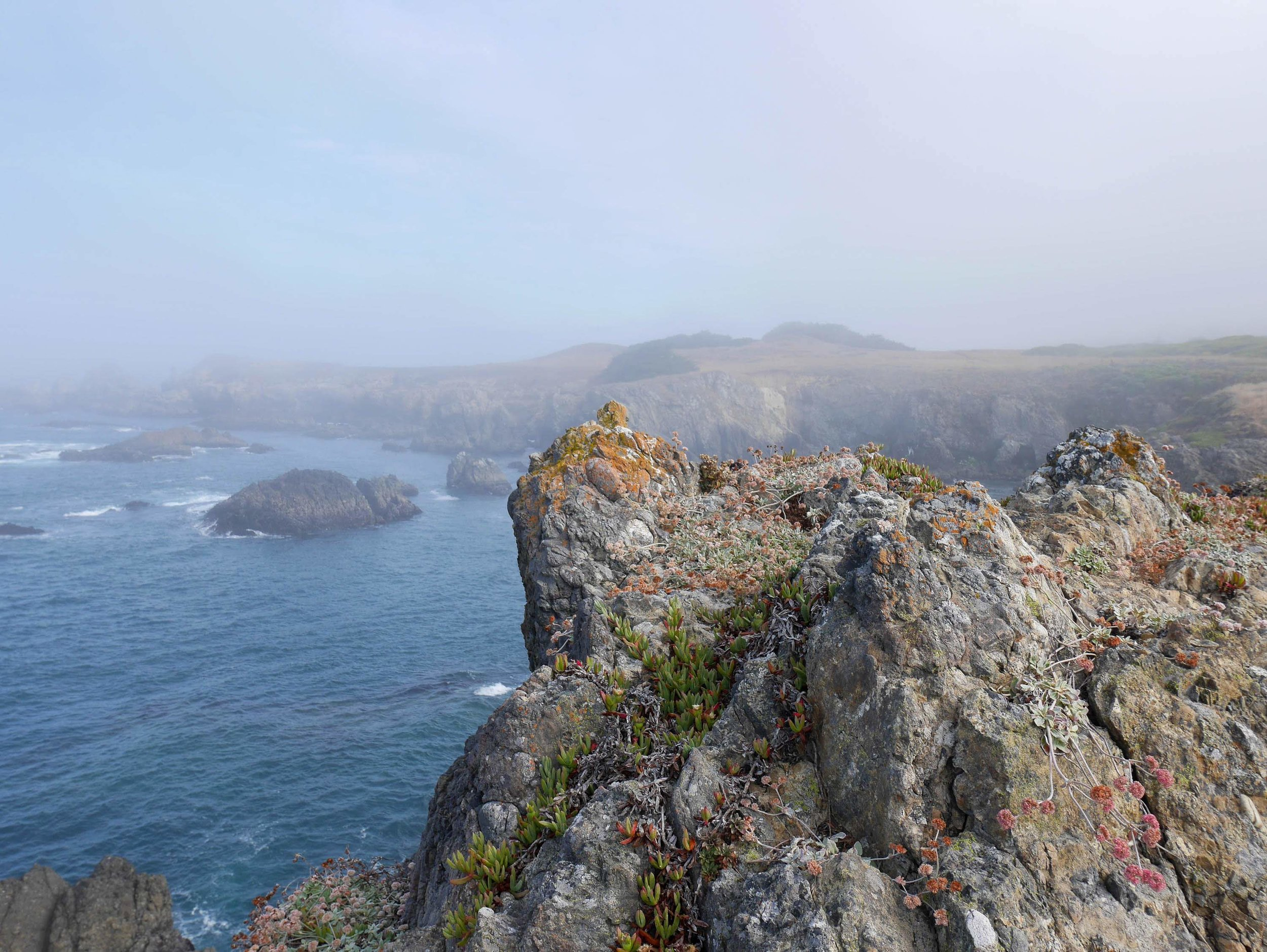 SeaRanch2019 (186 of 236).jpg