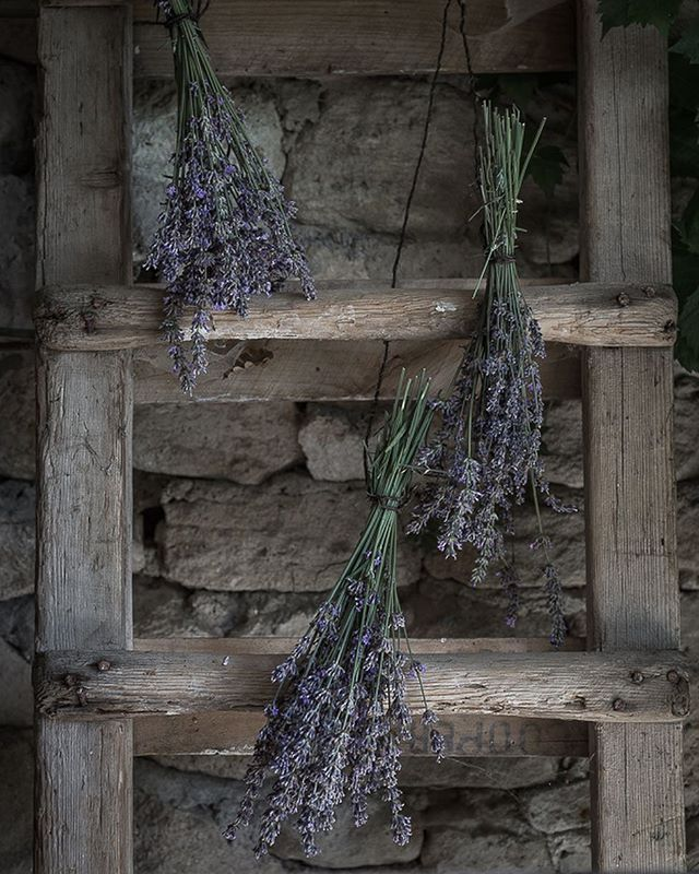 "Nothing evokes Provence more than lavender. Its colour, its perfume, its delicacy are each enough to transport us instantly to the south of France.  For me, lavender will now also evoke three highlights of the exceptional #foragefeastphotography retreat that continues to inhabit me.  First, a wonderful photo shoot led by Aimee from @twiggstudio and Olivia from @adelastertexturedfood. That moment was a beautiful reminder of how much combined talents, energies and wills can lead to wonderful results... Second, Annie's from @annabellehickson creative ""masterclass"" on foraging flowers and creating bouquets. What will most inspire me from that magic afternoon going forward is her unspoken and oh so wise invitation to look for and see beauty in what surrounds us rather than believe it has to come from some foreign and sophisticated place... And finally, this unexpectedly and incredibly moving moment when, before cooking her delicious ""gâteau d'émotions"", Gillan from @gillianbellcake seemed to halt the passage of time for a while to remind us how precious life is. Breathe, smell, listen, touch, taste, feel, live she said, while it is still time... Memorable moments and lessons, which will never be forgotten... Thank you... xxx"