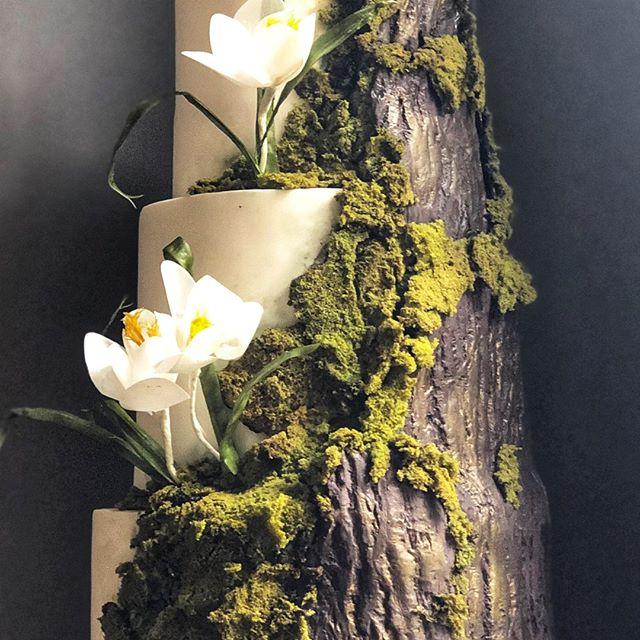 Spectacular details—close up shot of edible moss and chocolate marshmallow bark with wafer paper flowers. ⠀⠀⠀⠀⠀⠀⠀⠀⠀ ⠀⠀⠀⠀⠀⠀⠀⠀⠀ •⠀⠀⠀⠀⠀⠀⠀⠀⠀ •⠀⠀⠀⠀⠀⠀⠀⠀⠀ •⠀⠀⠀⠀⠀⠀⠀⠀⠀ •⠀⠀⠀⠀⠀⠀⠀⠀⠀ #amazingcake⠀⠀⠀⠀⠀⠀⠀⠀⠀ #amazingcakes⠀⠀⠀⠀⠀⠀⠀⠀⠀ #austintx⠀⠀⠀⠀⠀⠀⠀⠀⠀ #cakeartist⠀⠀⠀⠀⠀⠀⠀⠀⠀ #cakedecorating⠀⠀⠀⠀⠀⠀⠀⠀⠀ #cakedesign⠀⠀⠀⠀⠀⠀⠀⠀⠀ #cakemaker⠀⠀⠀⠀⠀⠀⠀⠀⠀ #cakeoftheday⠀⠀⠀⠀⠀⠀⠀⠀⠀ #customcake⠀⠀⠀⠀⠀⠀⠀⠀⠀ #customcakes⠀⠀⠀⠀⠀⠀⠀⠀⠀ #edibleart⠀⠀⠀⠀⠀⠀⠀⠀⠀ #austincakes⠀⠀⠀⠀⠀⠀⠀⠀⠀ #atxcakes⠀⠀⠀⠀⠀⠀⠀⠀⠀ #instabake⠀⠀⠀⠀⠀⠀⠀⠀⠀ #luxurycakes⠀⠀⠀⠀⠀⠀⠀⠀⠀ #baker⠀⠀⠀⠀⠀⠀⠀⠀⠀ #cakeart⠀⠀⠀⠀⠀⠀⠀⠀⠀ #cakestagram⠀⠀⠀⠀⠀⠀⠀⠀⠀ #instacake⠀⠀⠀⠀⠀⠀⠀⠀⠀ #atx⠀⠀⠀⠀⠀⠀⠀⠀⠀ #austin⠀⠀⠀⠀⠀⠀⠀⠀⠀ #moderncake⠀⠀⠀⠀⠀⠀⠀⠀⠀ #bookofcake⠀⠀⠀⠀⠀⠀⠀⠀⠀ #designercake⠀⠀⠀⠀⠀⠀⠀⠀⠀ #cakephotography⠀⠀⠀⠀⠀⠀⠀⠀⠀ #austinweddingcakes⠀⠀⠀⠀⠀⠀⠀⠀⠀ #atxwedding⠀⠀⠀⠀⠀⠀⠀⠀⠀ #austinwedding⠀⠀⠀⠀⠀⠀⠀⠀⠀ #weddingcake⠀⠀⠀⠀⠀⠀⠀⠀⠀ #weddingcakes