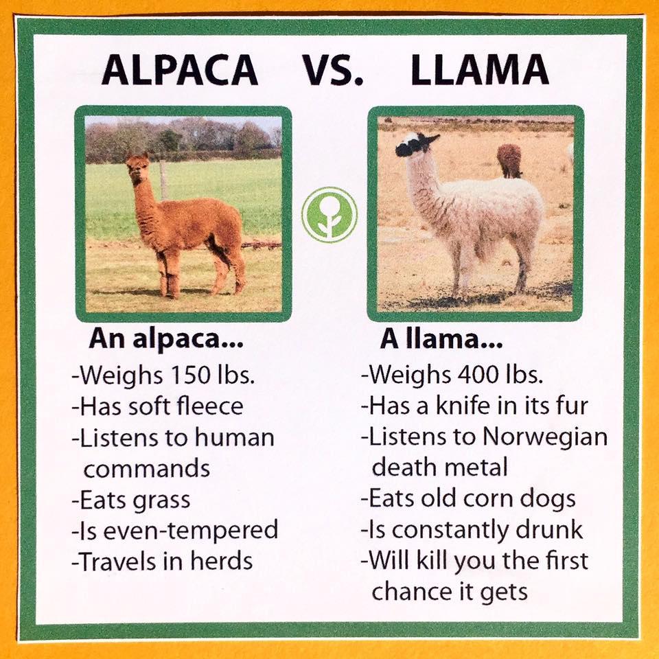 alpaca-llama.jpg