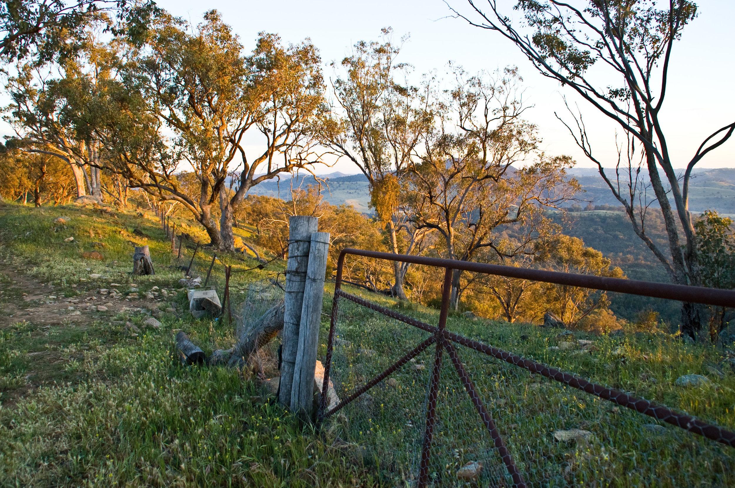 Landscape_0047-HiRes-FMD.jpg