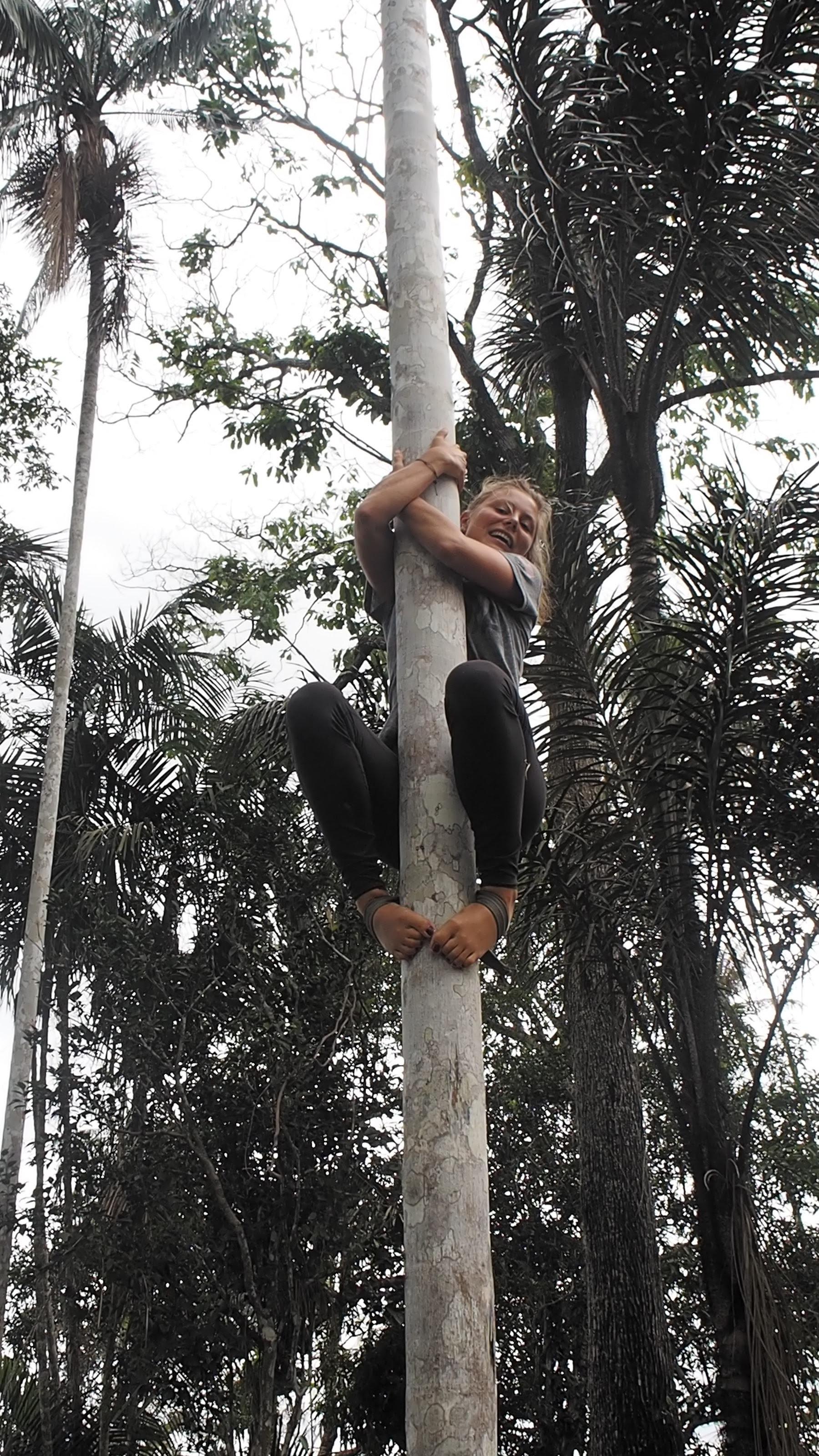 Açaí palm climbing