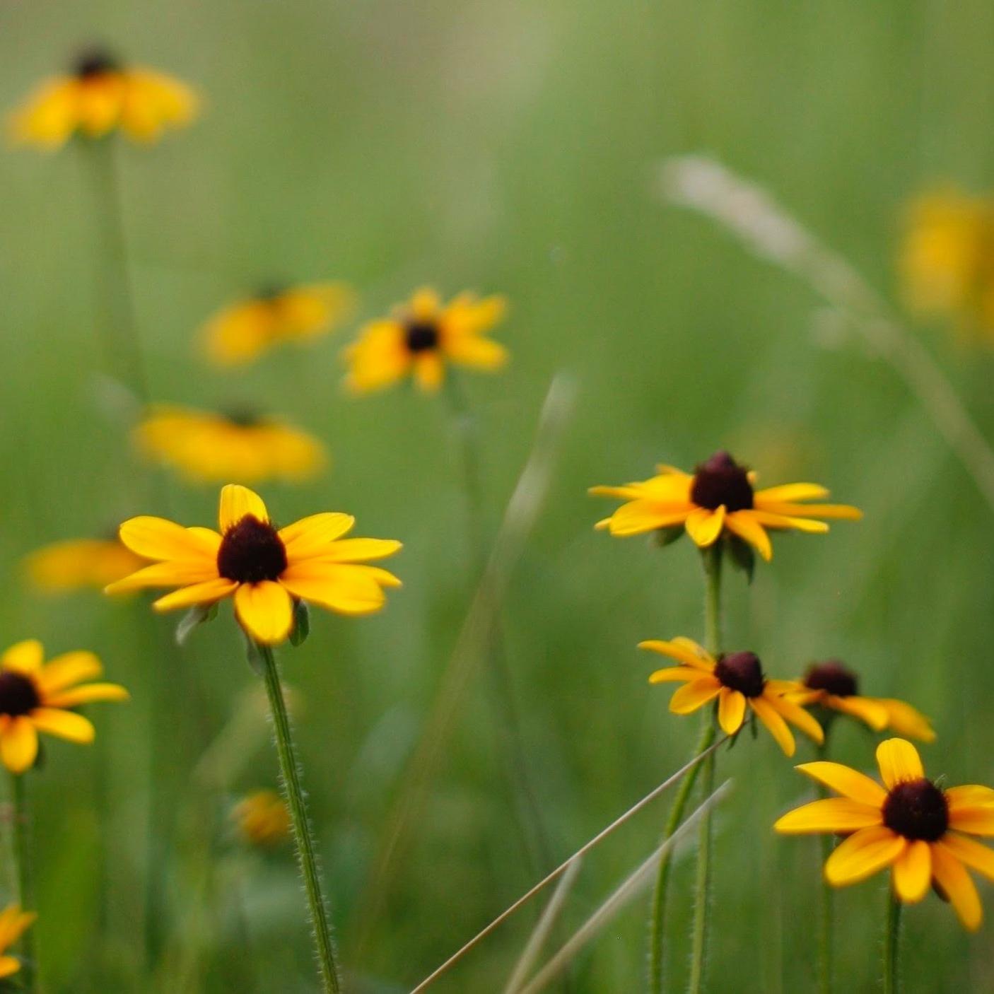 Native Plants -