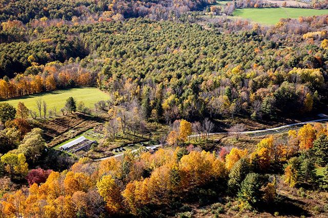 This is @HeliaNativeNursery in autumn. You can see our greenhouse, shadehouse, seedbank with the surrounding ecosystems where we're able to selectively wild harvest native seeds with appreciation and respect for the living beings and lands all around us. Thanks for the 📷@lisavollmerphotography  #habitatrestoration #helianativenursery #autumn #aerialshot #seedbank #nativeplants #wildharvest #nativetrees #mitakuyeoyasin #fortheloveofplants #fortheloveofinsects #fortheloveofpollinators #alllove #meadows #forests