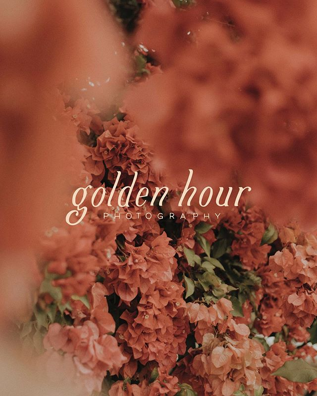 The dreamiest hour of the day is the inspiration that brought this brand to life. Golden Hour was designed in celebration of warm, natural light and made for the business that values thoughtful, creative moments outdoors. It also happens to be one of our personal favorites.  Shop Golden Hour and other semi-custom brands at www.thesuiteshop.co (link in bio!) 🍬  #thesuiteshop #photobugcommunity #photographerbranding #photobug #photobrand  #custombrand #handlettering #handmadebrand #creativepreneur
