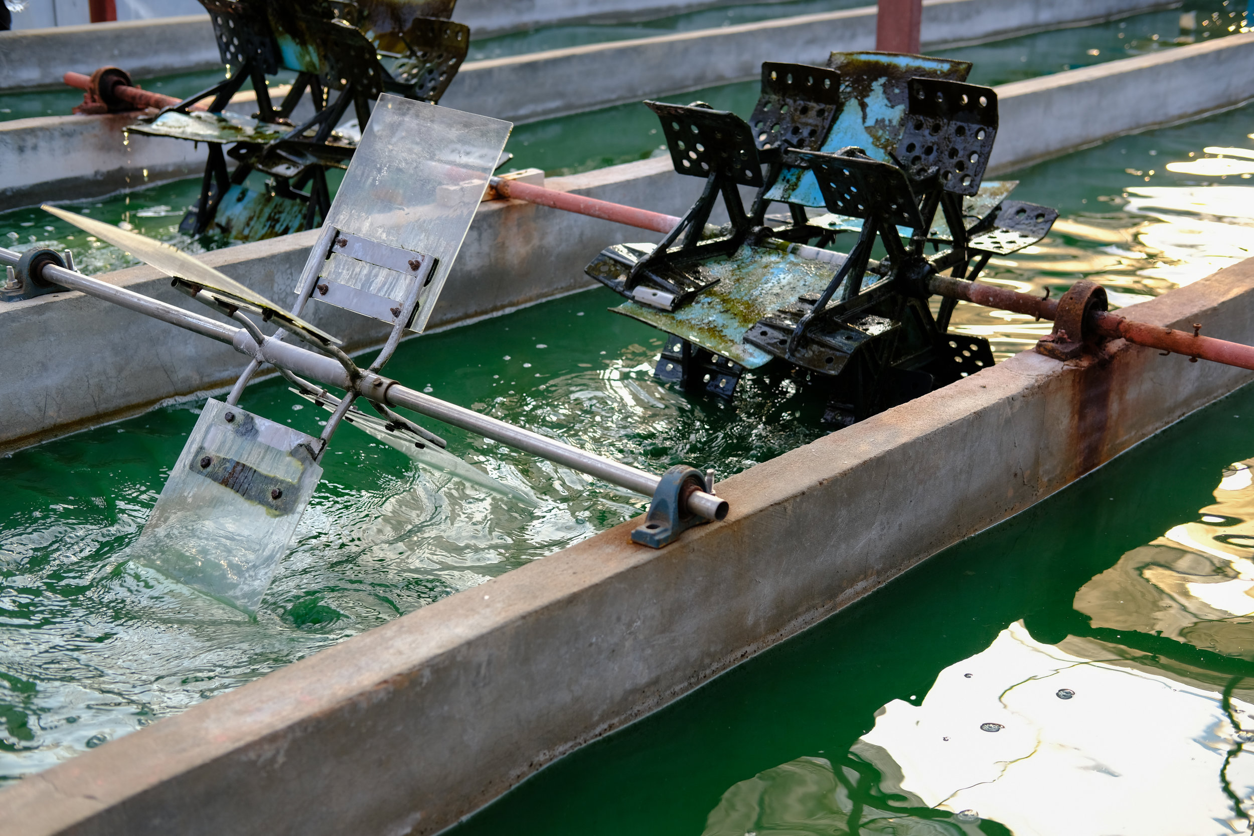 Bassins de spiruline -