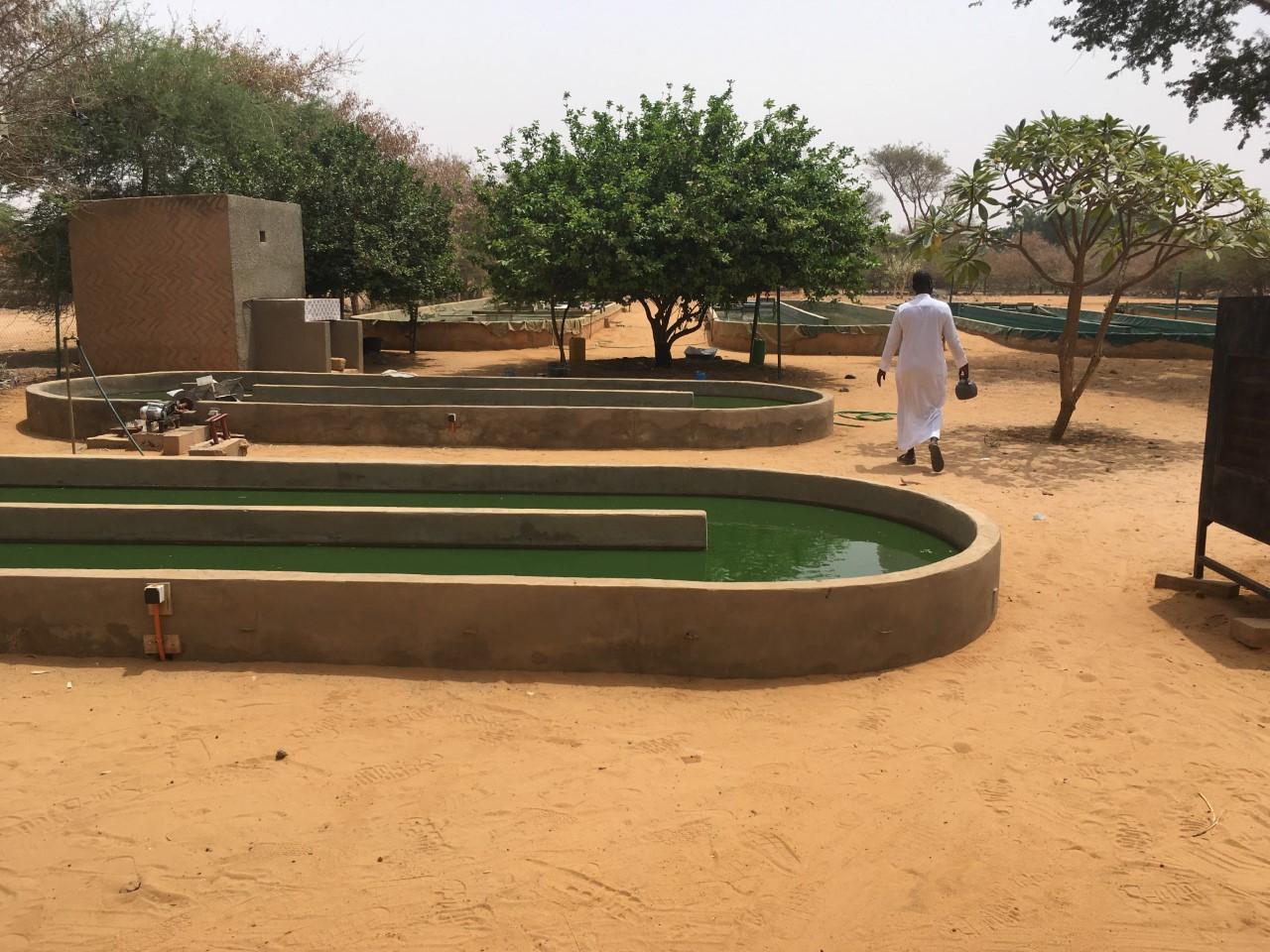 Au détour de nos voyages, voir la vie en vert nous a conduit à découvrir la spiruline… - Fanny Parise, Mars 2019 à Dogondoutchi (Niger).