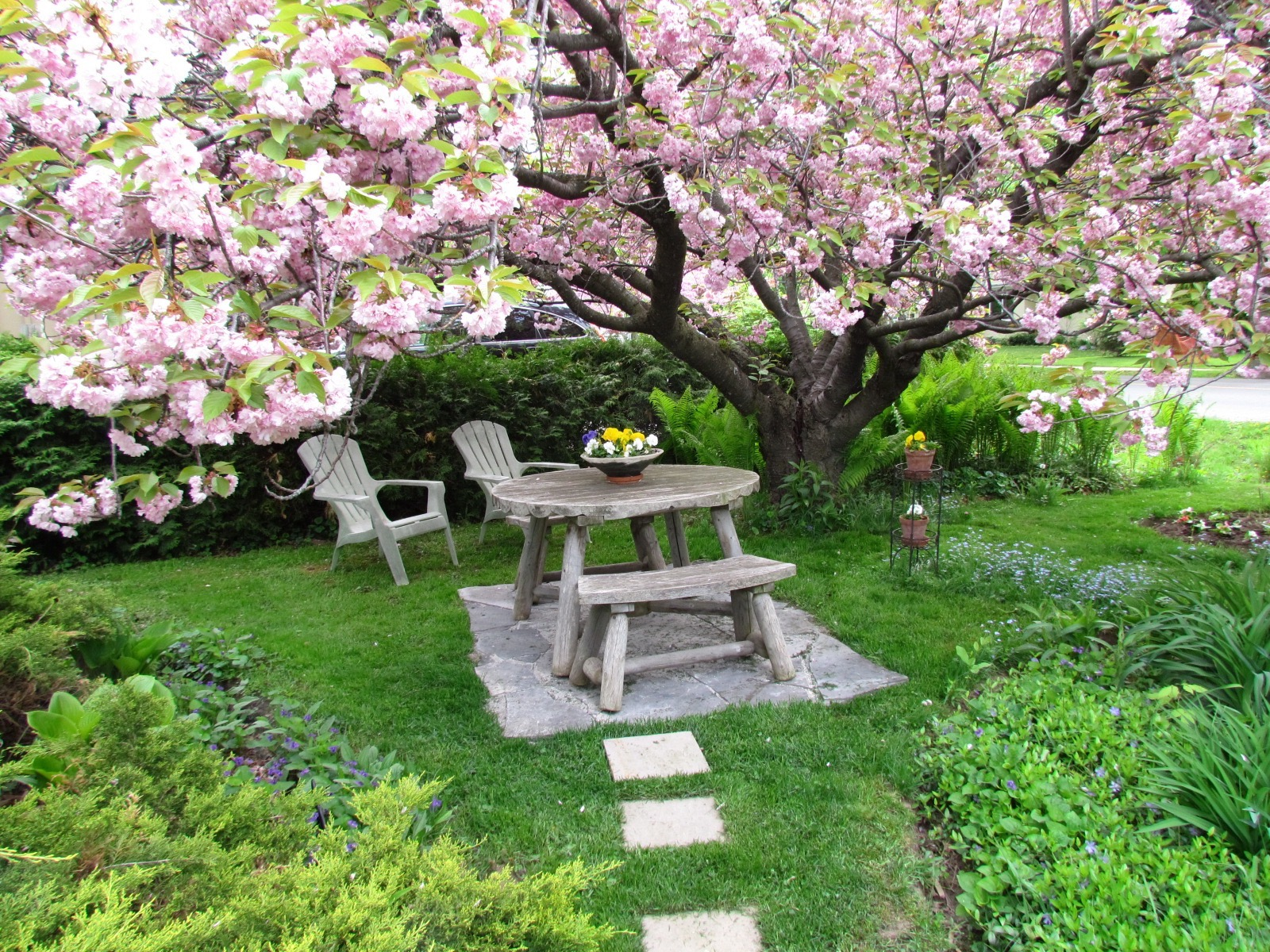 cherry blossoms picnic table peaceful bnb b&b bed breakfast