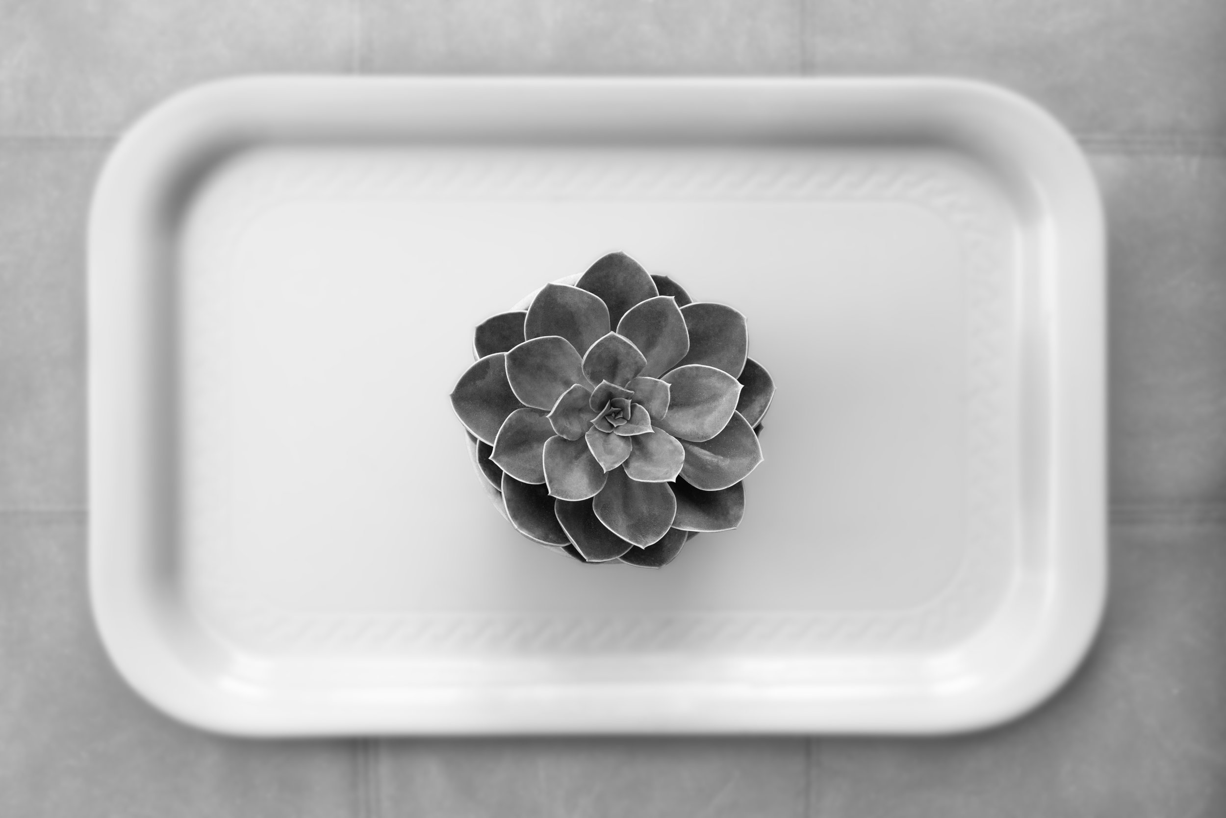 Plant_on_tray.jpg