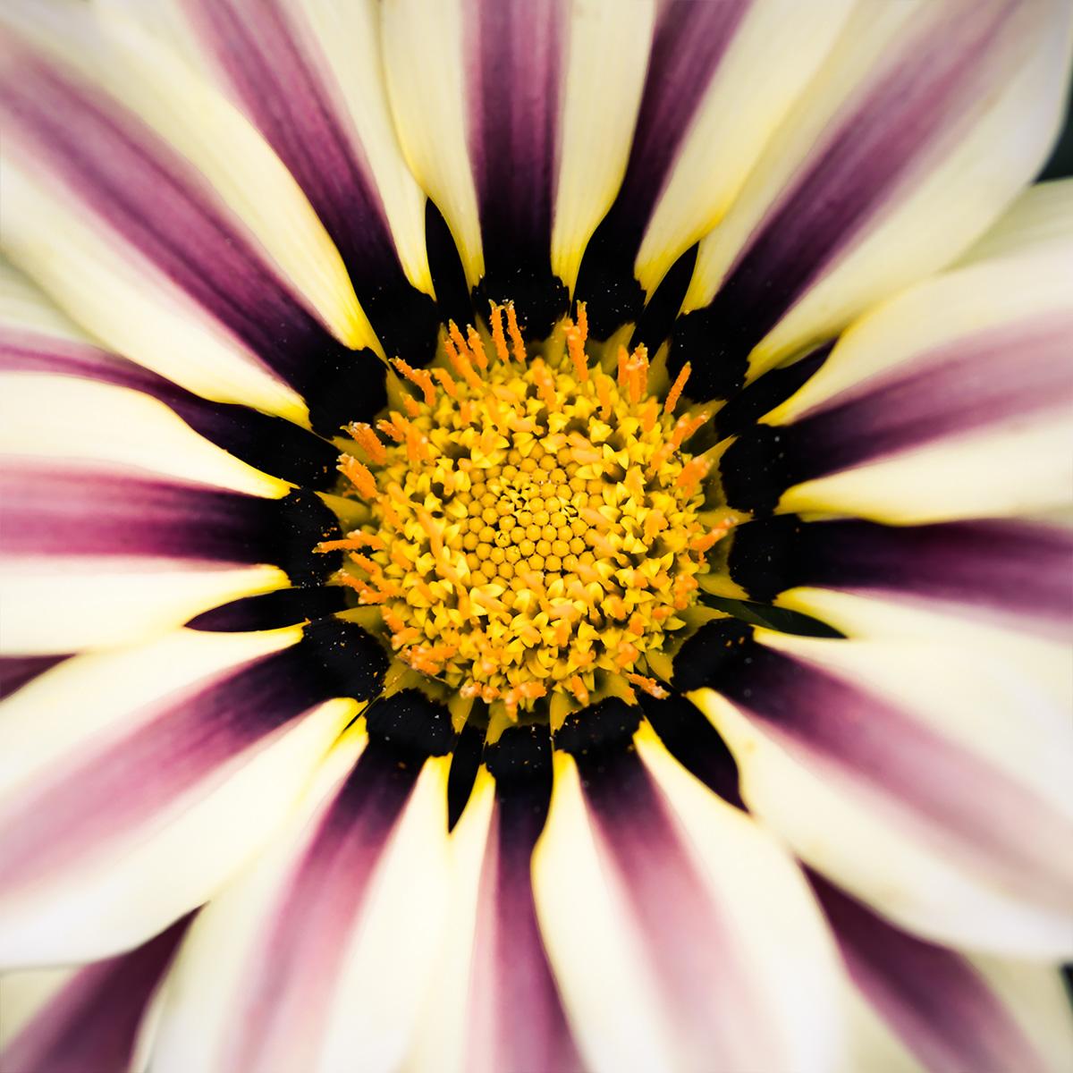 nature-flower-macro-1.jpg