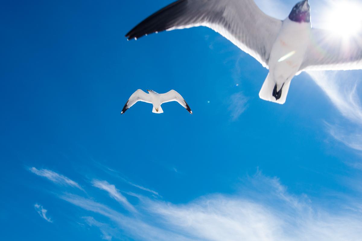 nature-wildlife-bird-seagull-1.jpg