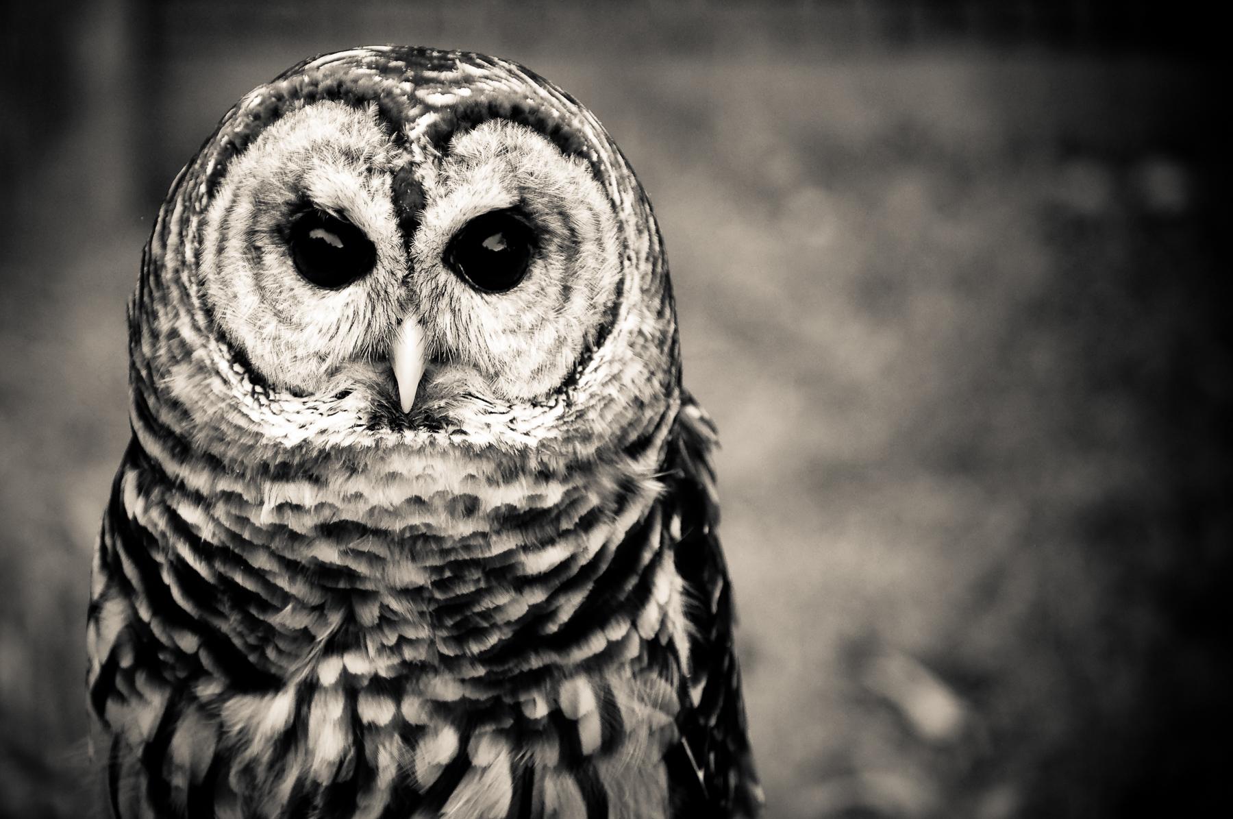 nature-wildlife-bird-owl.jpg