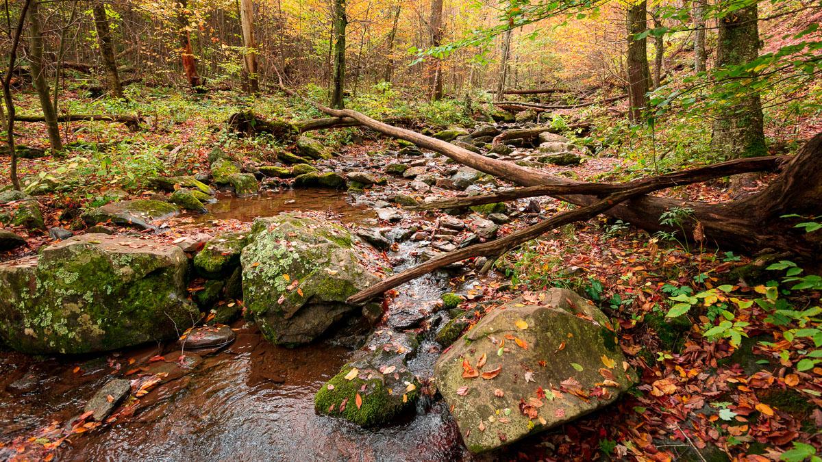 nature-landscape-virginia-fall-1.jpg