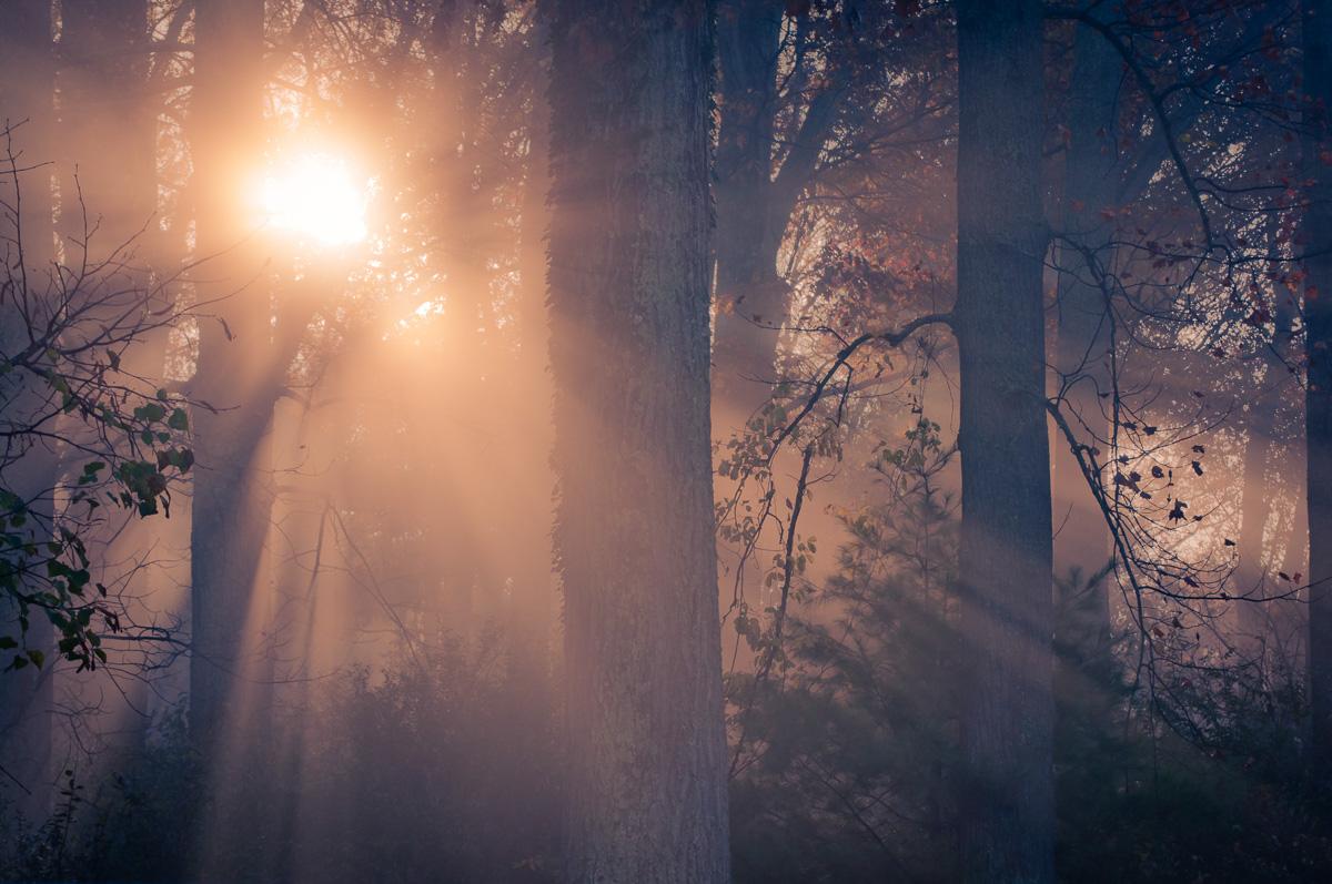 nature-landscape-forest-1.jpg