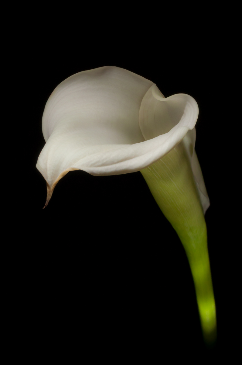product-fineart-flora-lily-1.jpg