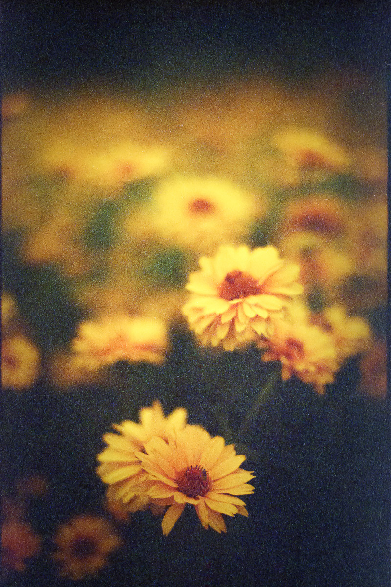 fineart-flowers-film-color-1.jpg