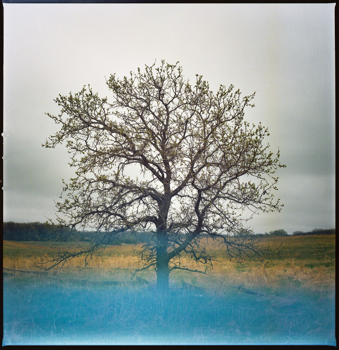 fineart-tree-film-color-1.jpg