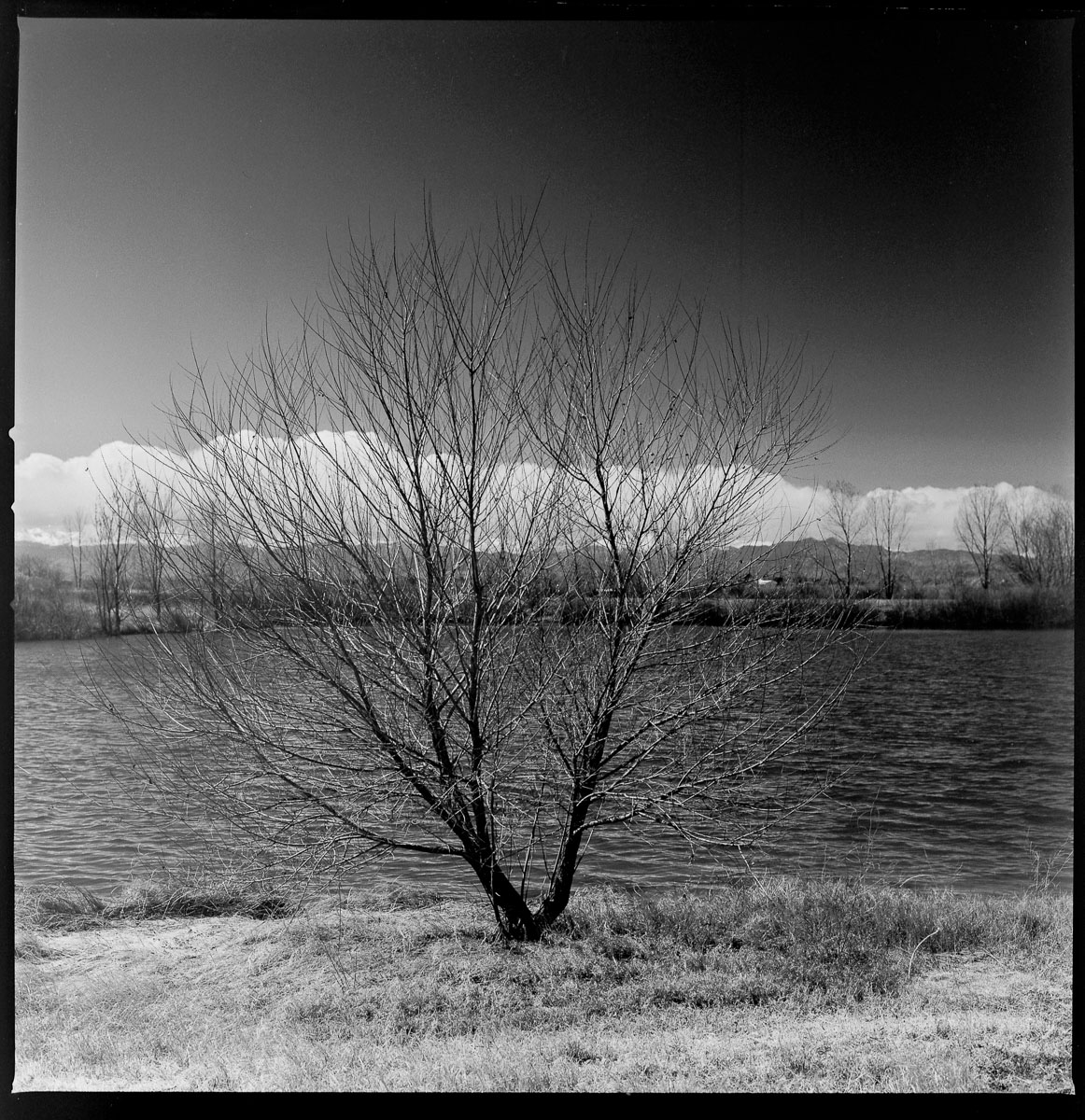 fineart-tree-film-bw-1.jpg