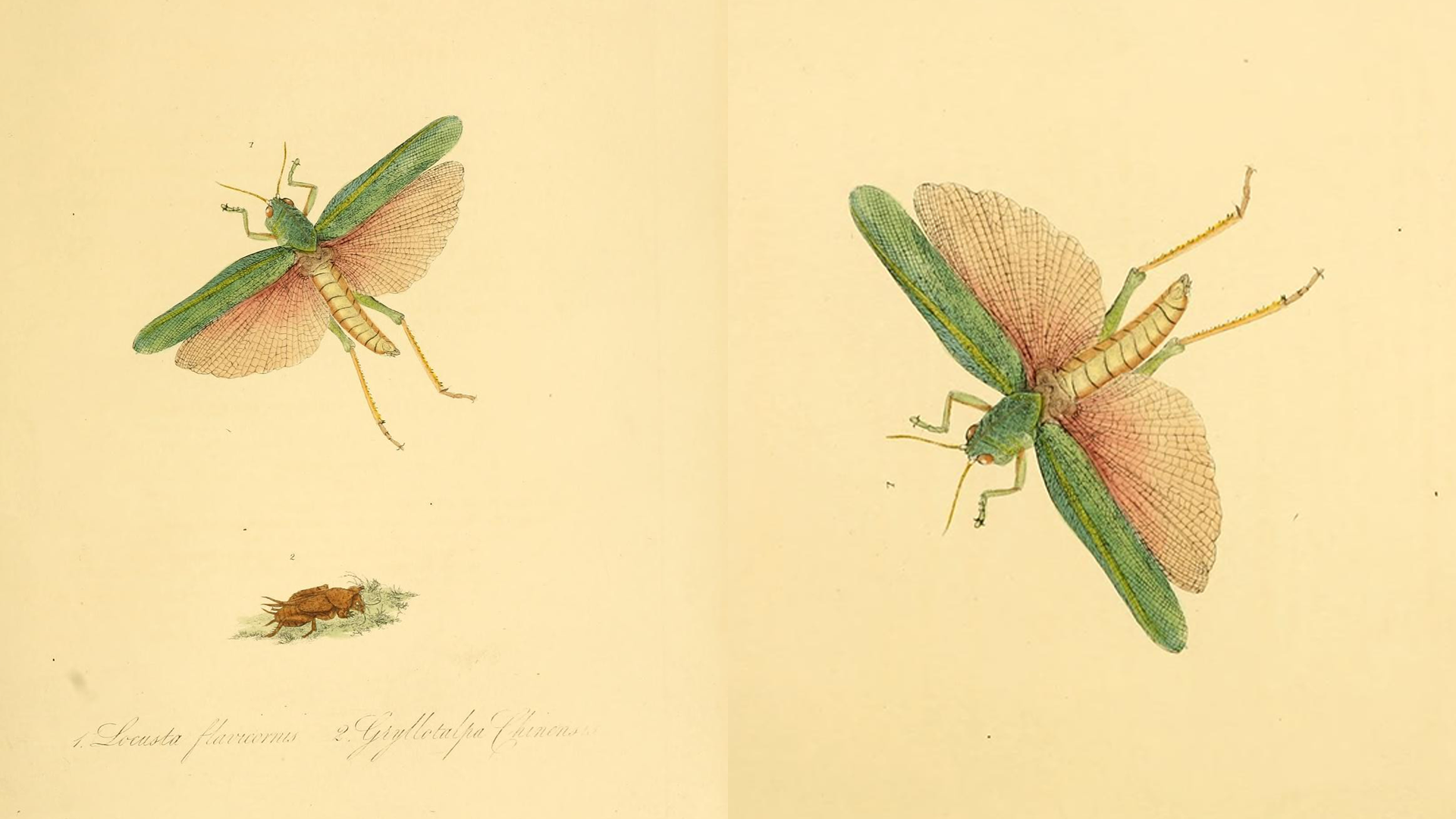 Natural history of the insects of China (Pl. 12)